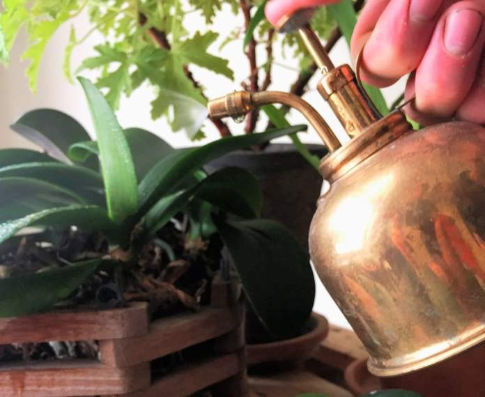 Humidity for houseplants