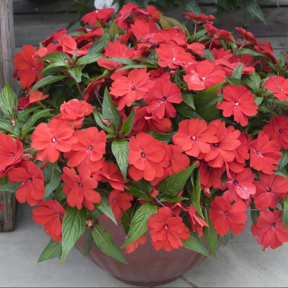 Colorful Plants For Shade Gardening Plants That Bloom In Shade