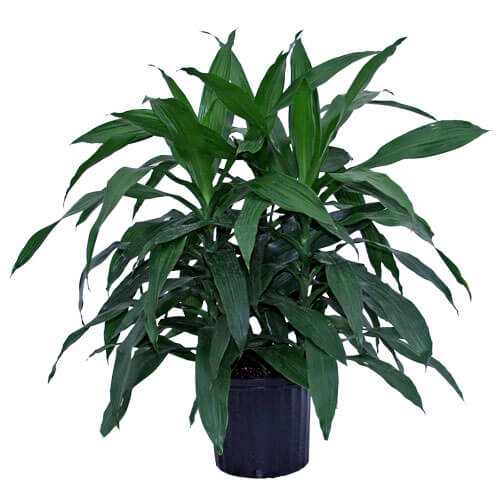 Janet Craig: Breathe Easy with an Indoor Garden: Improve the Air Quality and Charm of Your Home with Houseplants