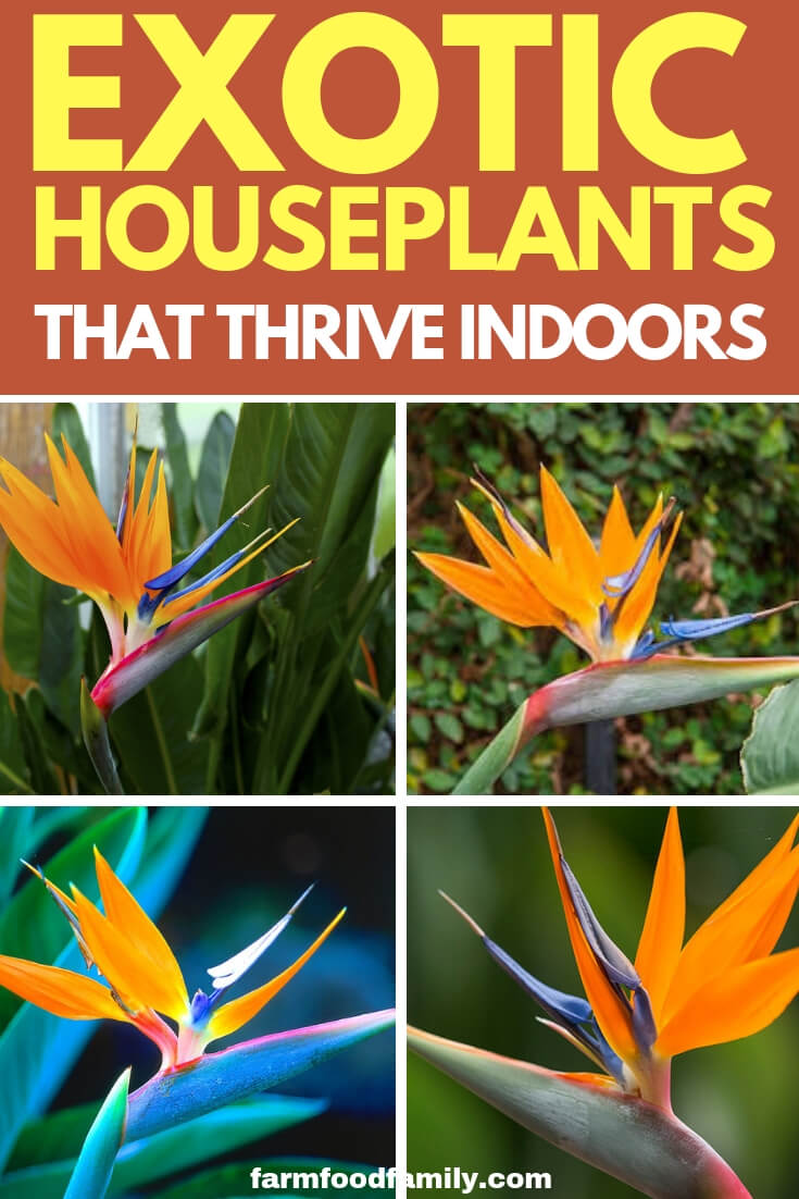 Easy Exotic Tropical Houseplants that grow easily indoors