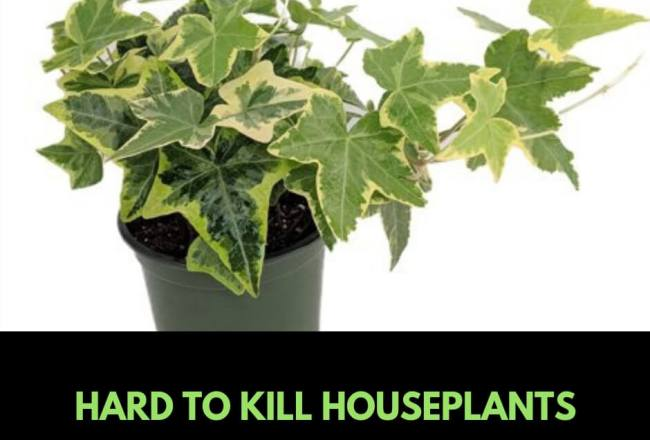 10 hark to kill houseplants
