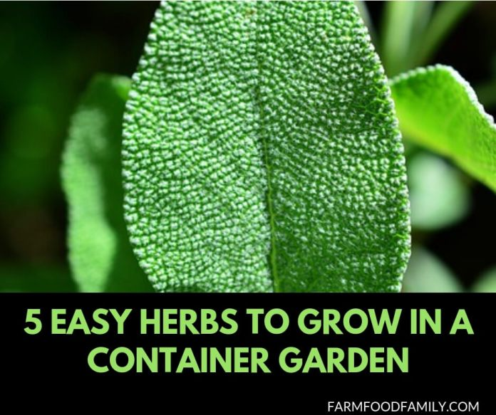 5 easy herbs to grow in container garden indoor