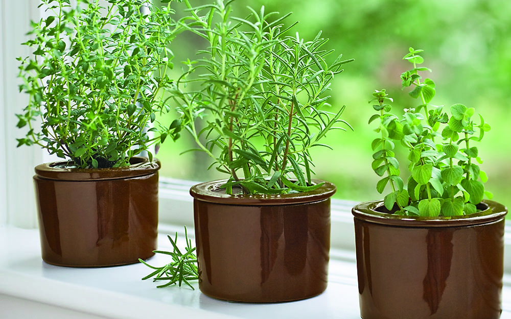 Choosing The Right Herbs For An Indoor Herb Garden