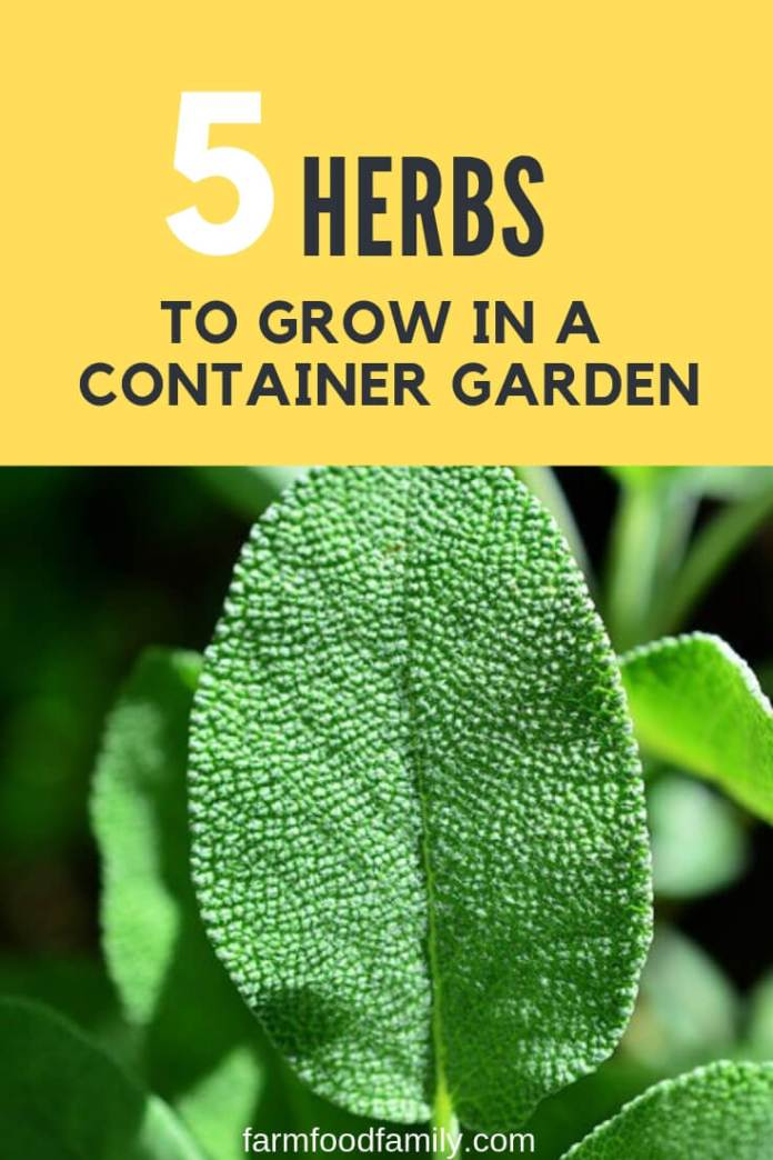5 Easy Herbs to Grow in a Container Garden: Hassle-free Indoor Herb