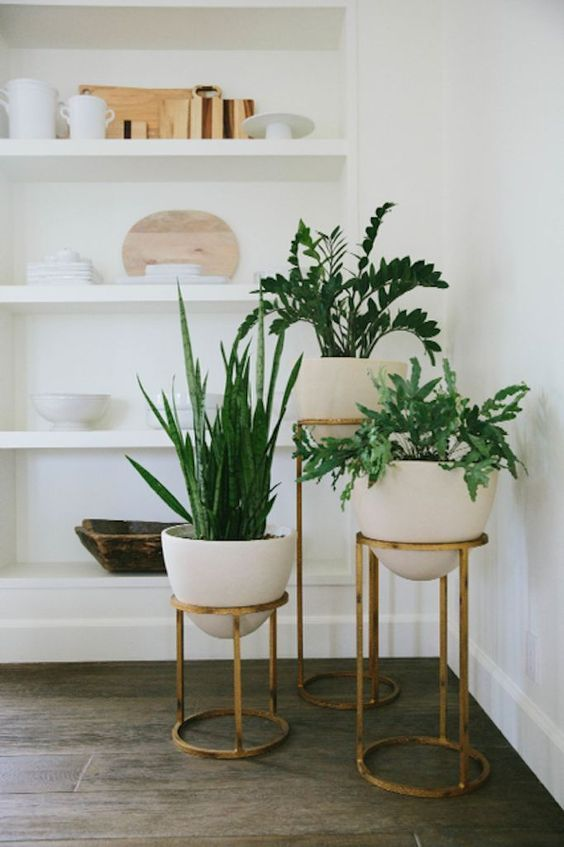 Home design trends with houseplants