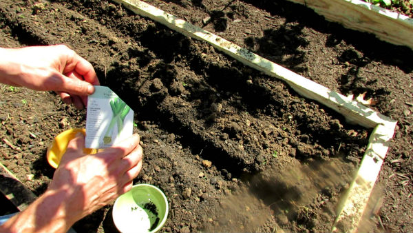 Sowing seeds in garden bed