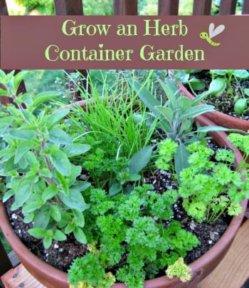 Build an herb container   Flower Garden Ideas for Containers and Windowboxes