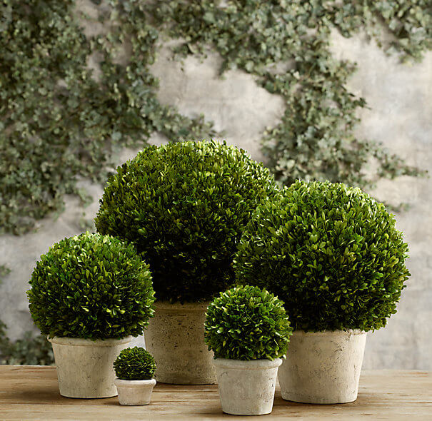 Boxwood | Home Landscape Design For Winter Gardens