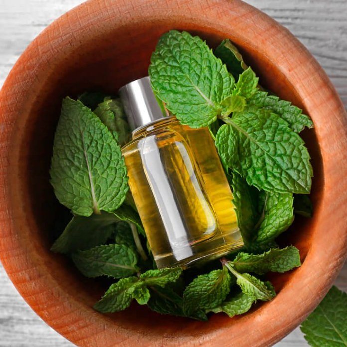 The Elusive Lemon Balm Essential Oil