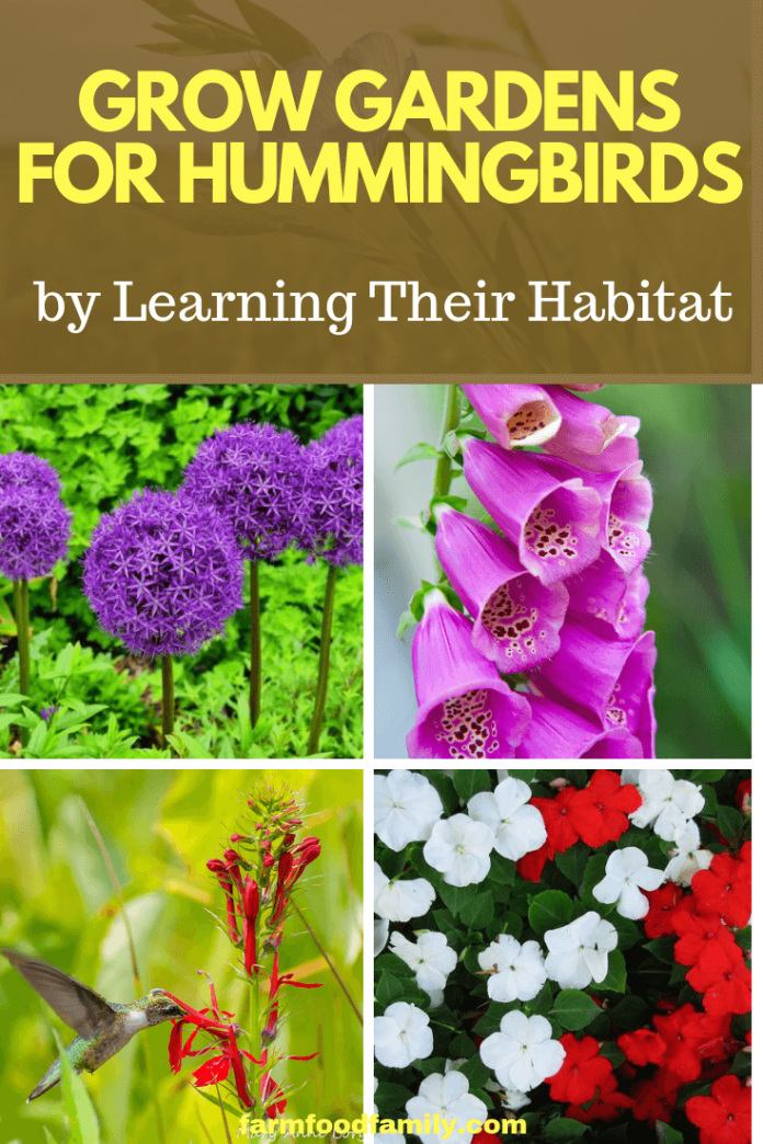 Grow Gardens for Hummingbirds: Plant the Correct Flowers for Pollinators by Learning Their Habitat