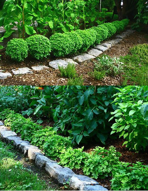 Herb border | How to Use Herbs as Edging