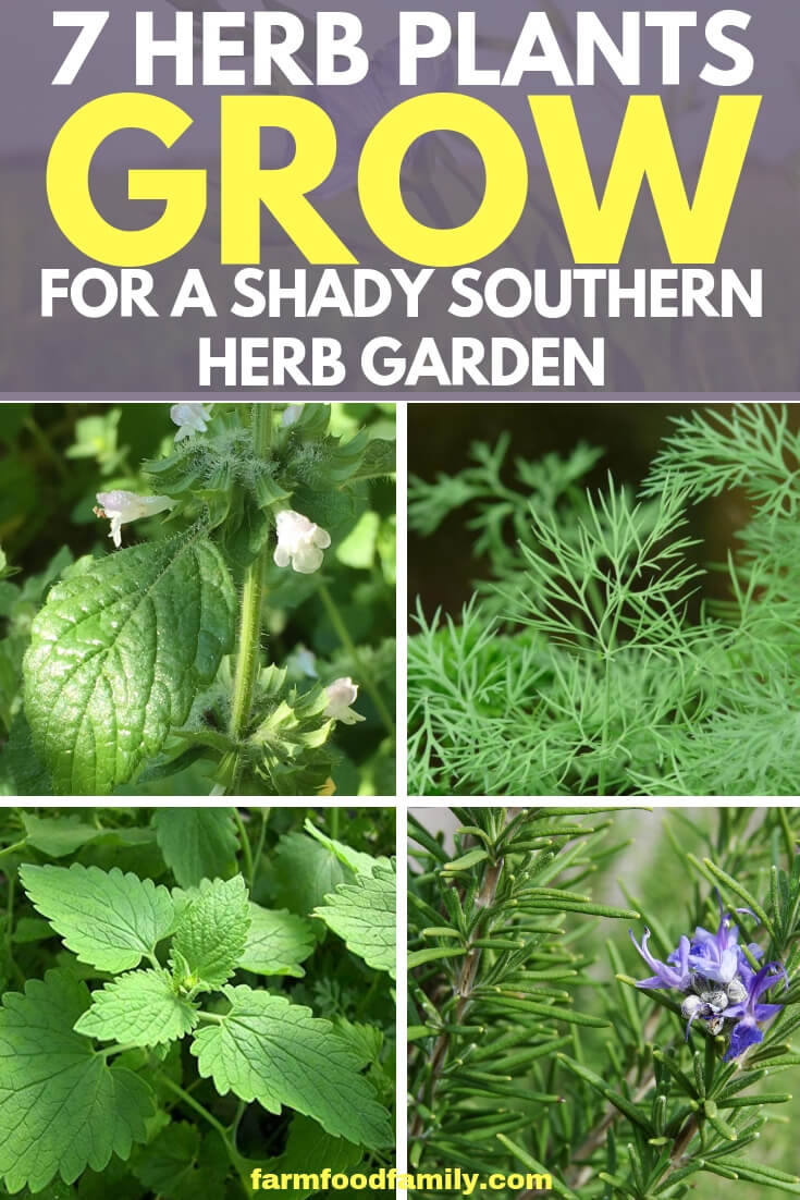 7 Herbs That Easy to grow for shady southern herb garden