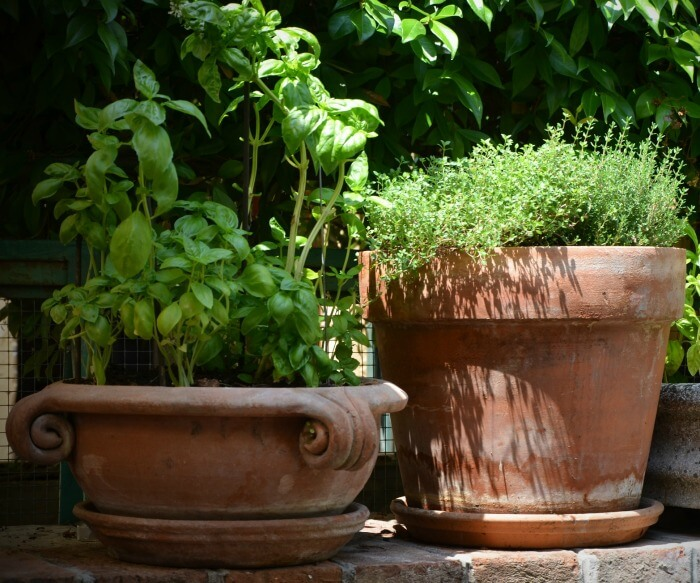 Soak your clay pots in a warm water bath before planting