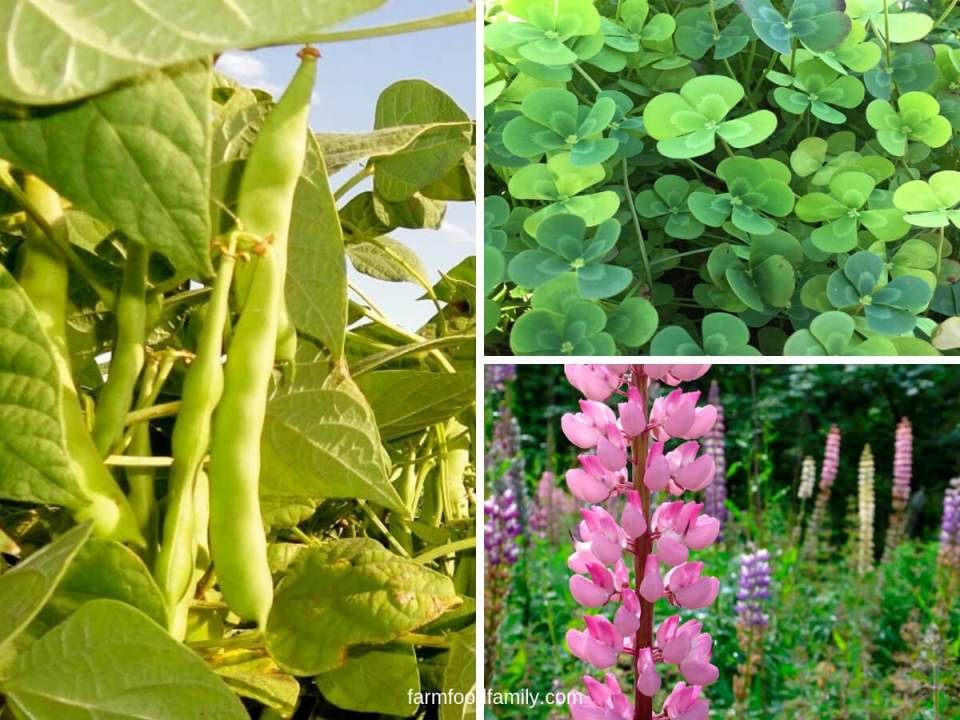 What are The Benefits of Growing Green Manures?