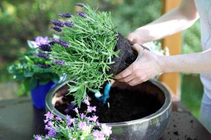 Caring for Overwintering Plants