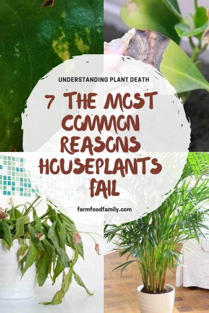 Understanding why houseplant death: the most common reasons houseplants fail