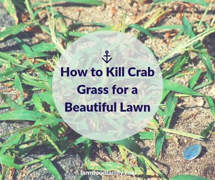 How to Kill Crab Grass for a Beautiful Lawn