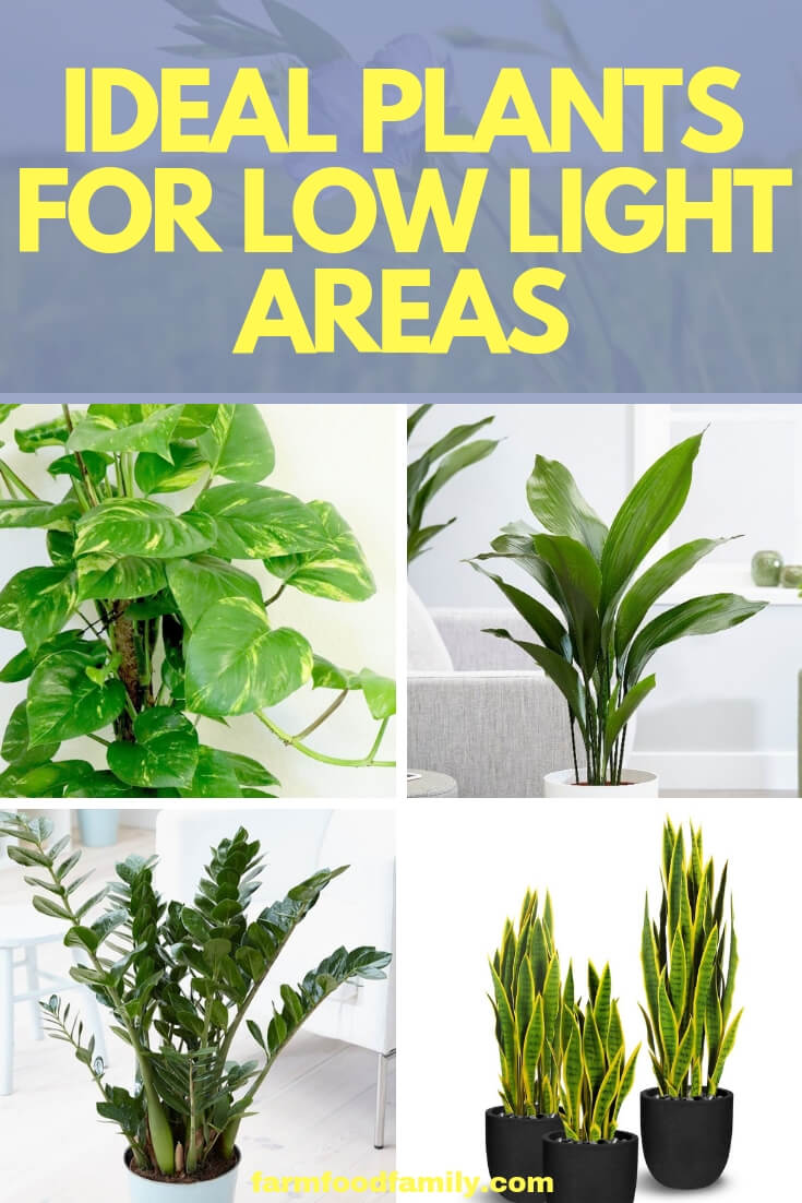 Ideal Plants For Low Light Areas