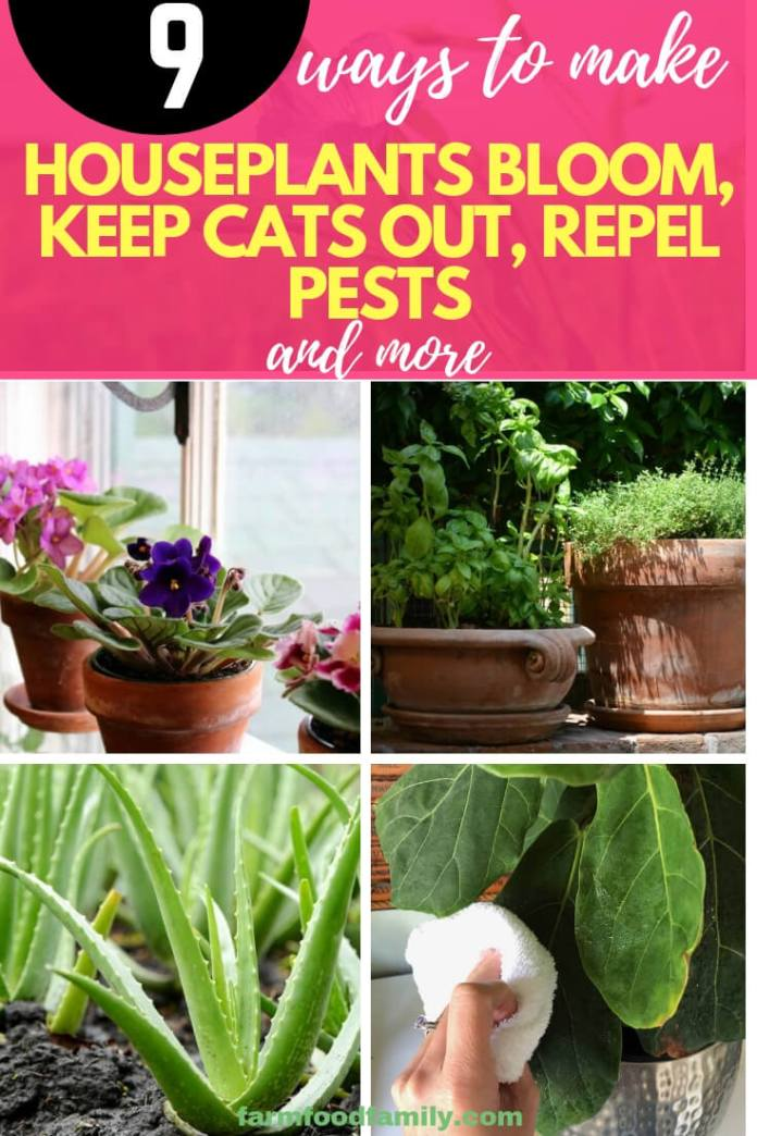 9 Ways to Make HousePlants Bloom, Keep Cats Out, Repel Pests