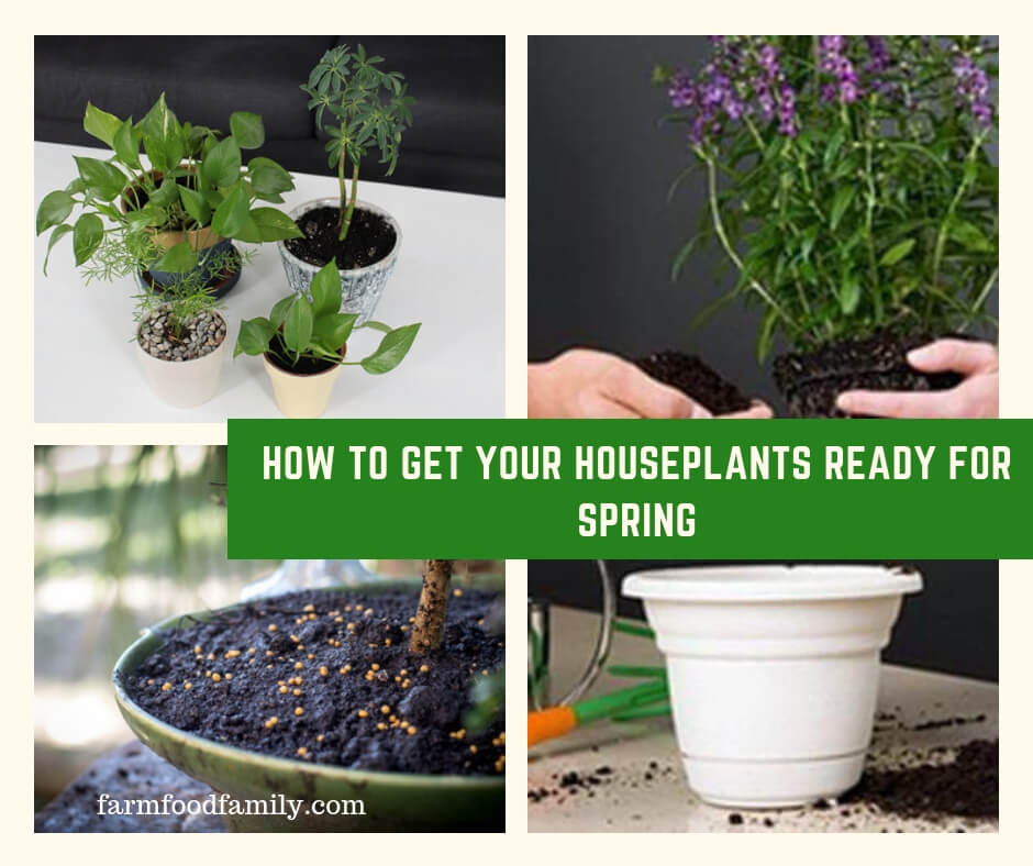 How to Get Your Houseplants Ready for Spring