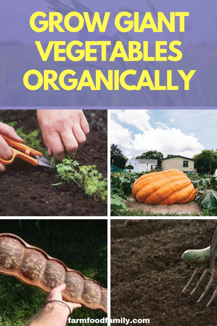 Grow Giant Vegetables Organically