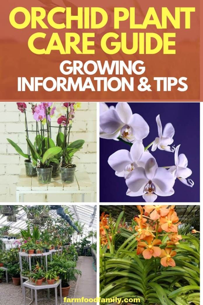 This collection of Orchid Care Articles will help you easily find all of the basic information you'll need to begin to successfully grow and bloom orchids.