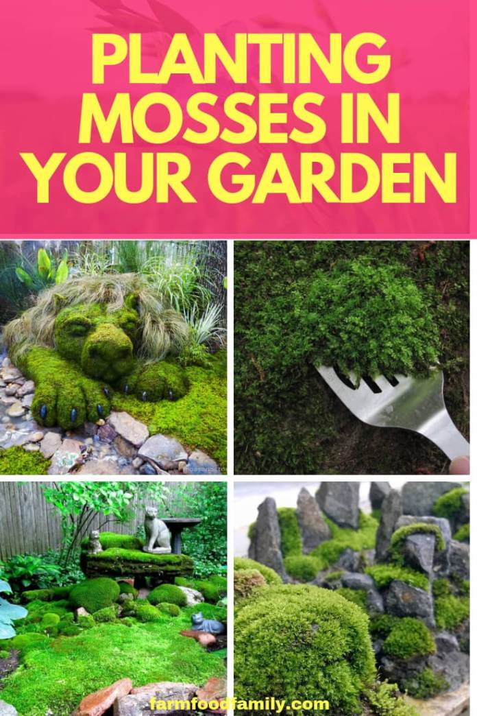 Planting Mosses in Your Garden
