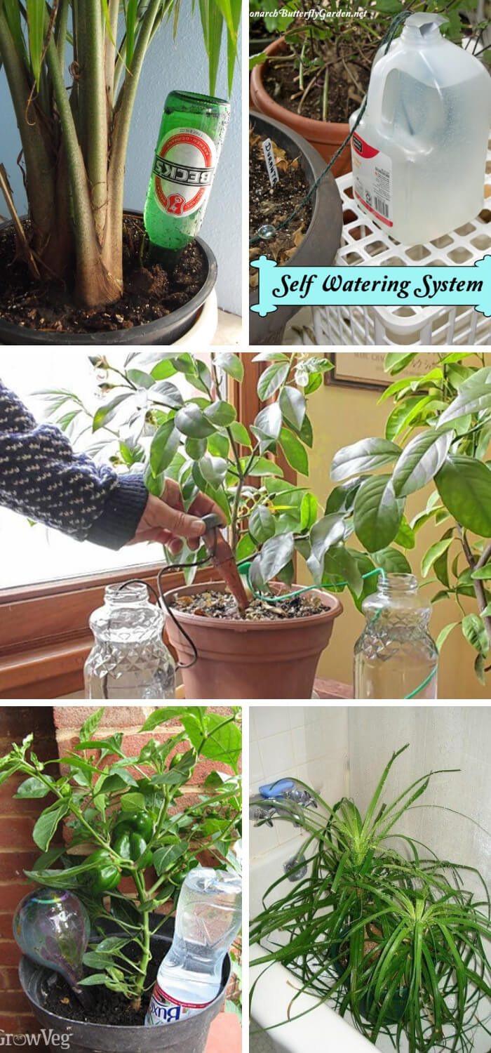 Watering houseplants when you're away: These are the solutions | Best DIY Self-Watering System Ideas