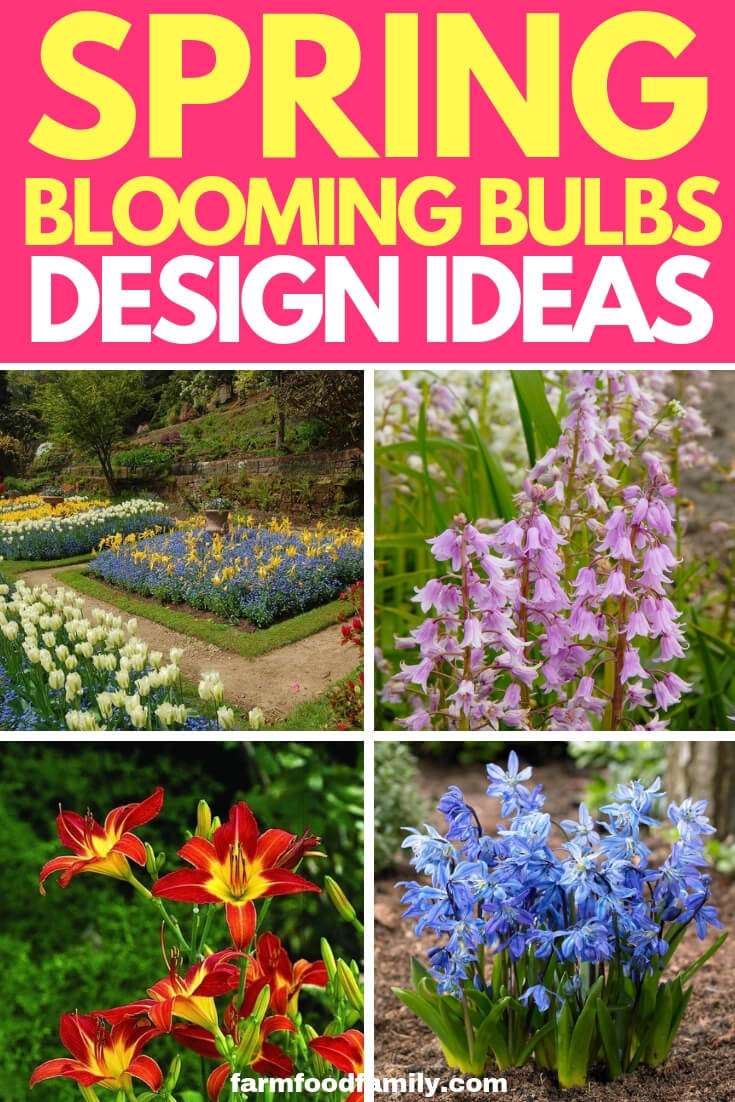 Spring-blooming Bulbs Design Ideas
