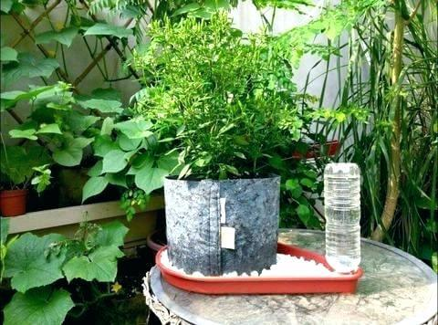Self watering pots | Best DIY Self-Watering System Ideas