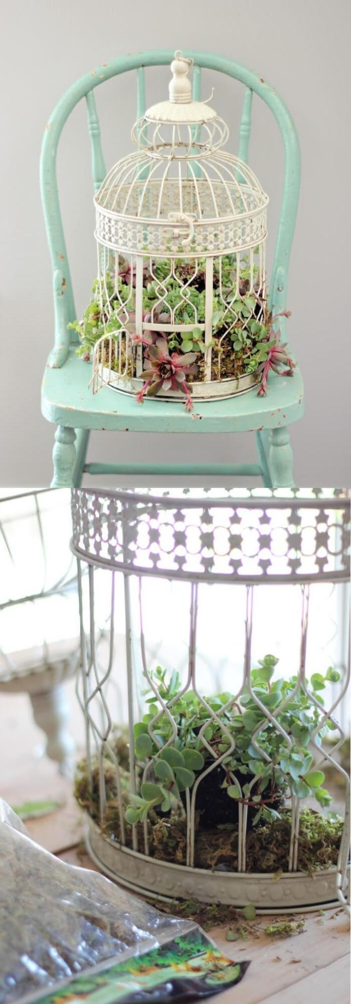 Plant succulents in a birdcage