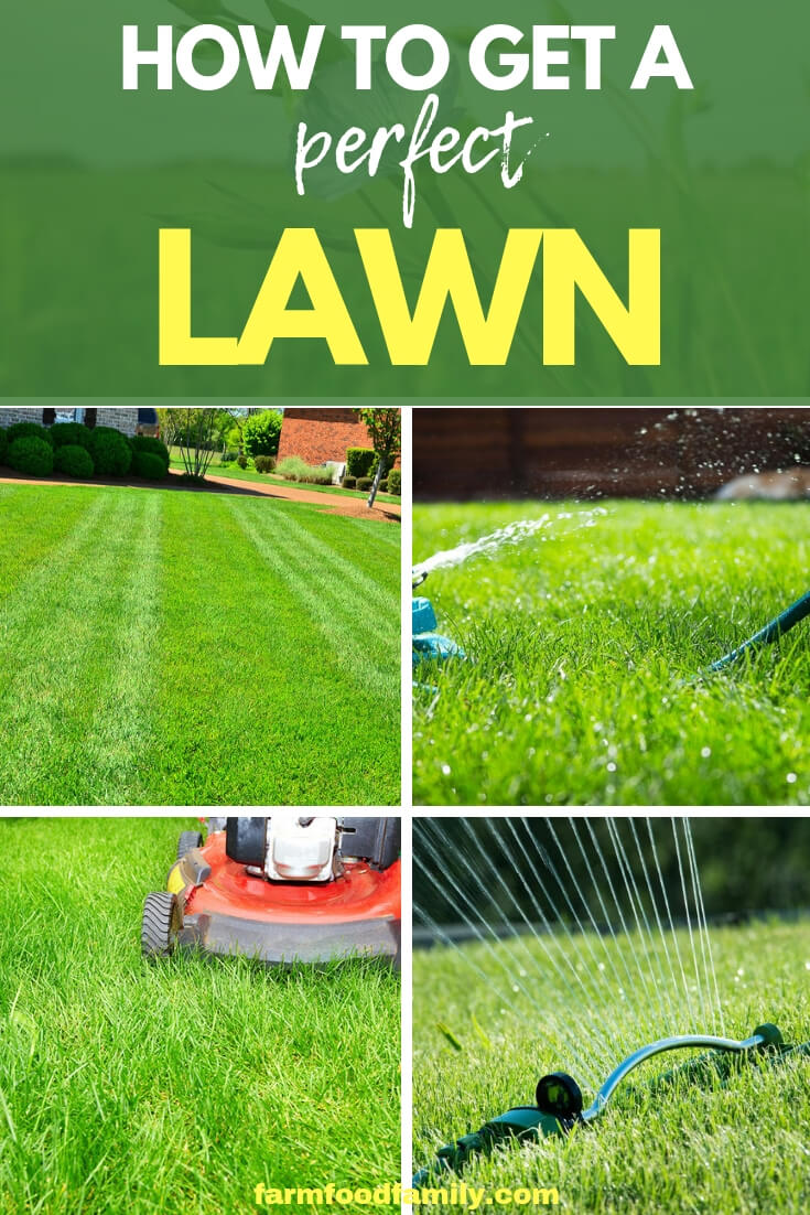 A lawn requires care but by following some basic guidelines a green carpet to envy can be produced. Find out how to get a perfect lawn.