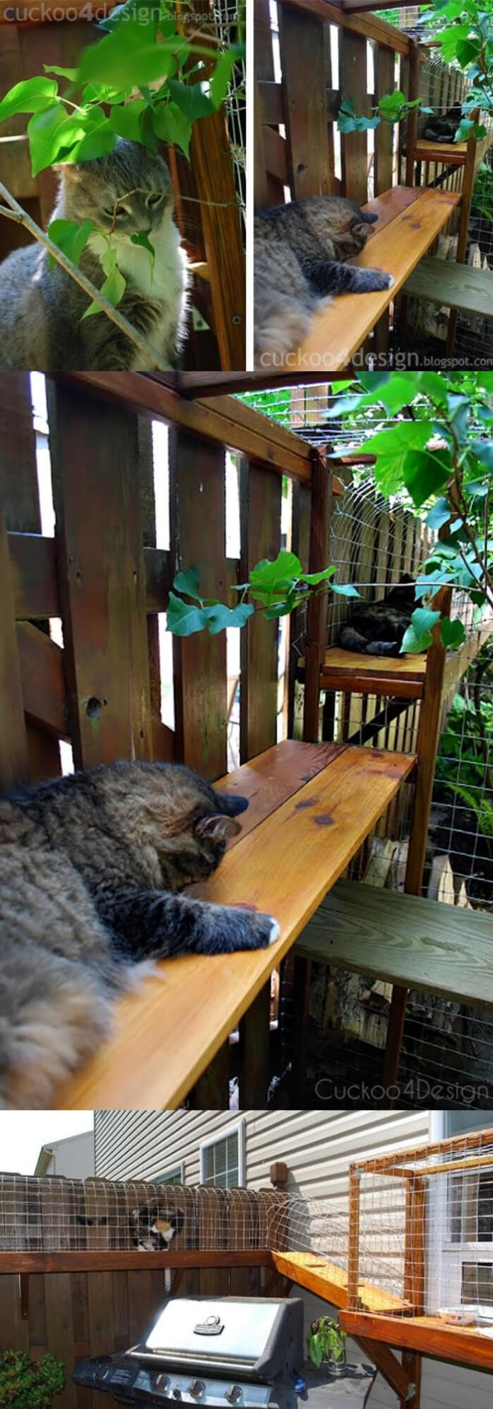 Easy DIY Cat Enclosure | DIY Backyard Projects For Summer | FarmFoodFamily