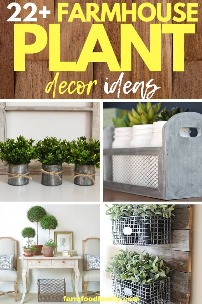 Best Farmhouse Indoor Plant Decor Ideas For Your House