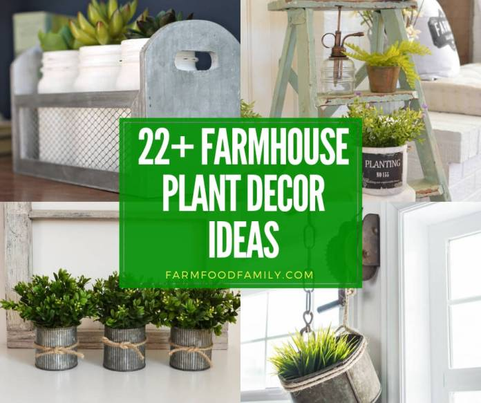 best farmhouse plant decor ideas