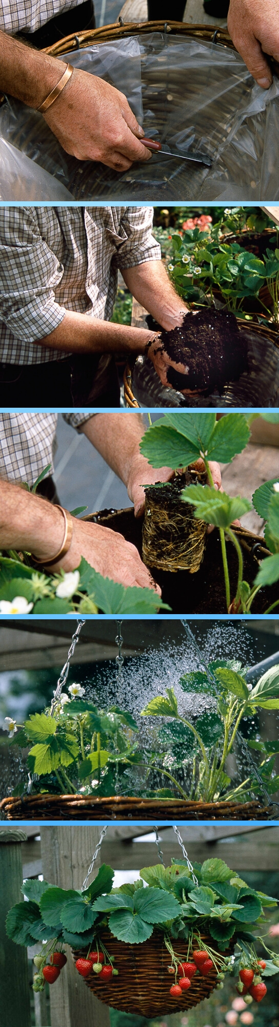 How to create and plant strawberry hanging basket