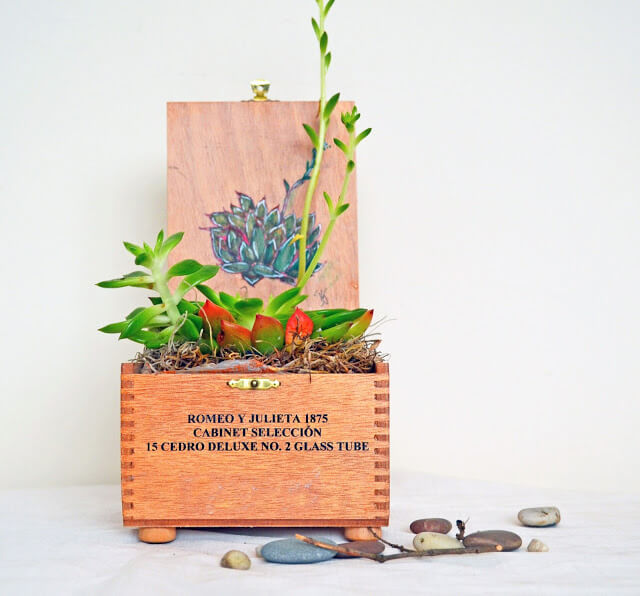 Cigar Box Planter