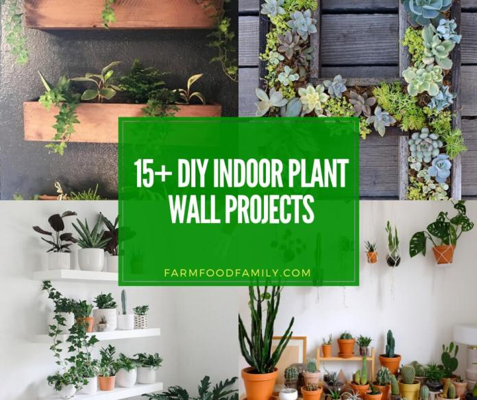 best diy indoor plant wall projects & ideas