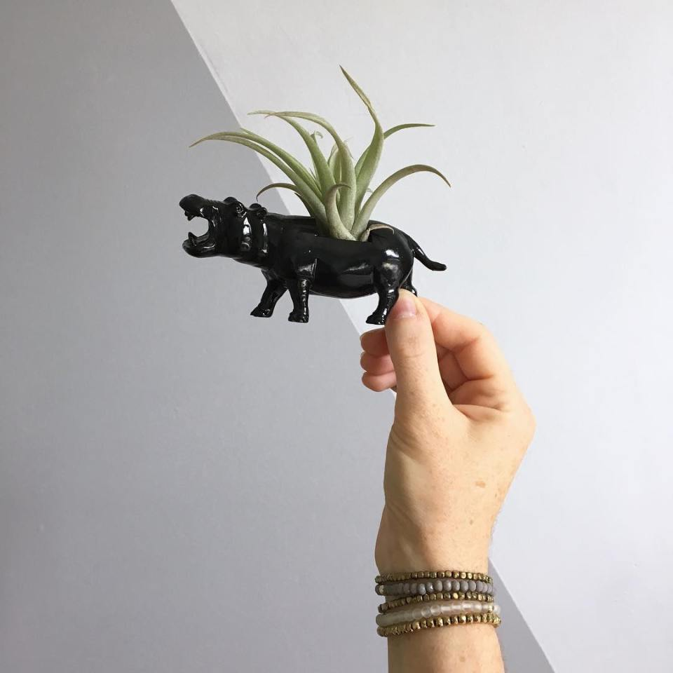 Small black hippo pot with succulent