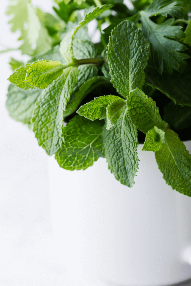 Mint: 10 Plants That Repel Flies Naturally and Keep the Home Bug-Free