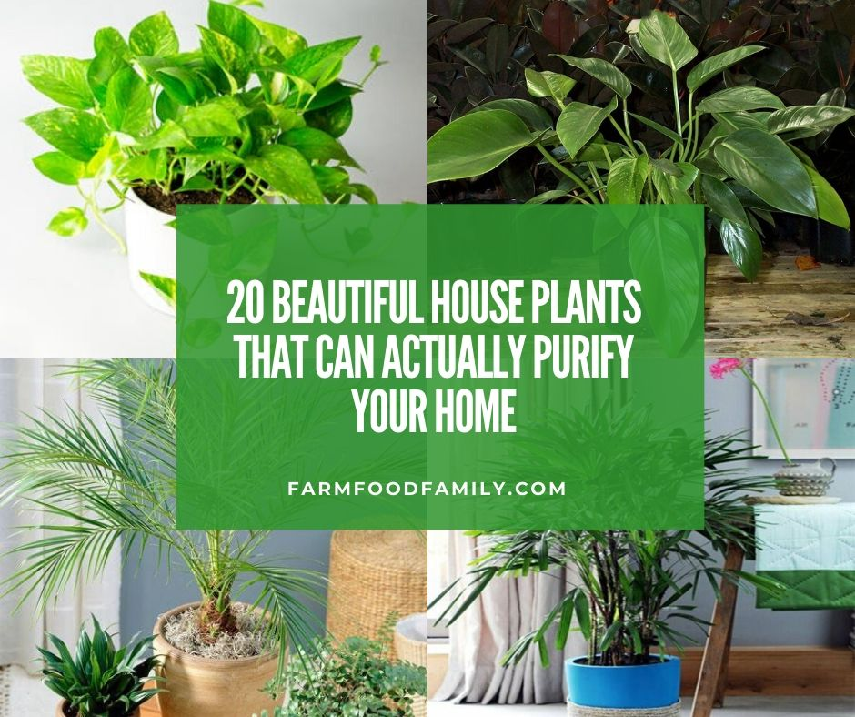 20 Beautiful House Plants That Can Actually Purify Your Home