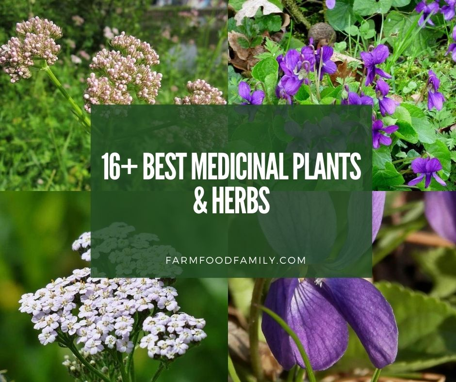 16 Best Medicinal Plants And Their Uses With Names And Pictures