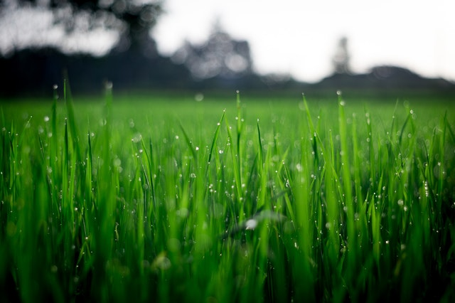 What're The Best Conditions For Aeration?