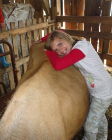 Getting a Family Milk Cow – Part 1