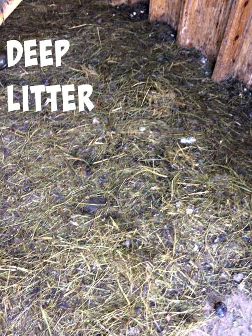 deep litter