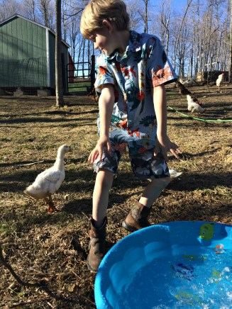 duck pool 3