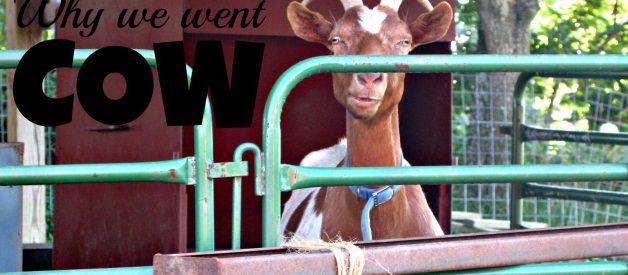 Goat v/s Cow