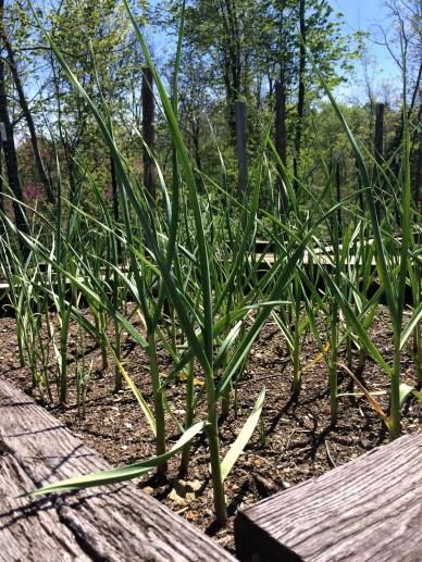 april garden 10