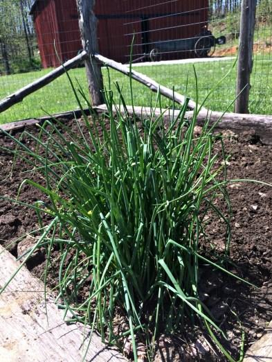 april garden 5