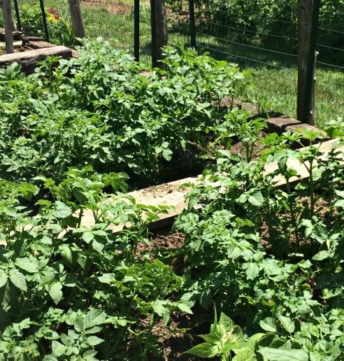 garden may 9